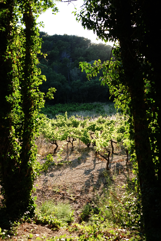 provence-france-gigondas