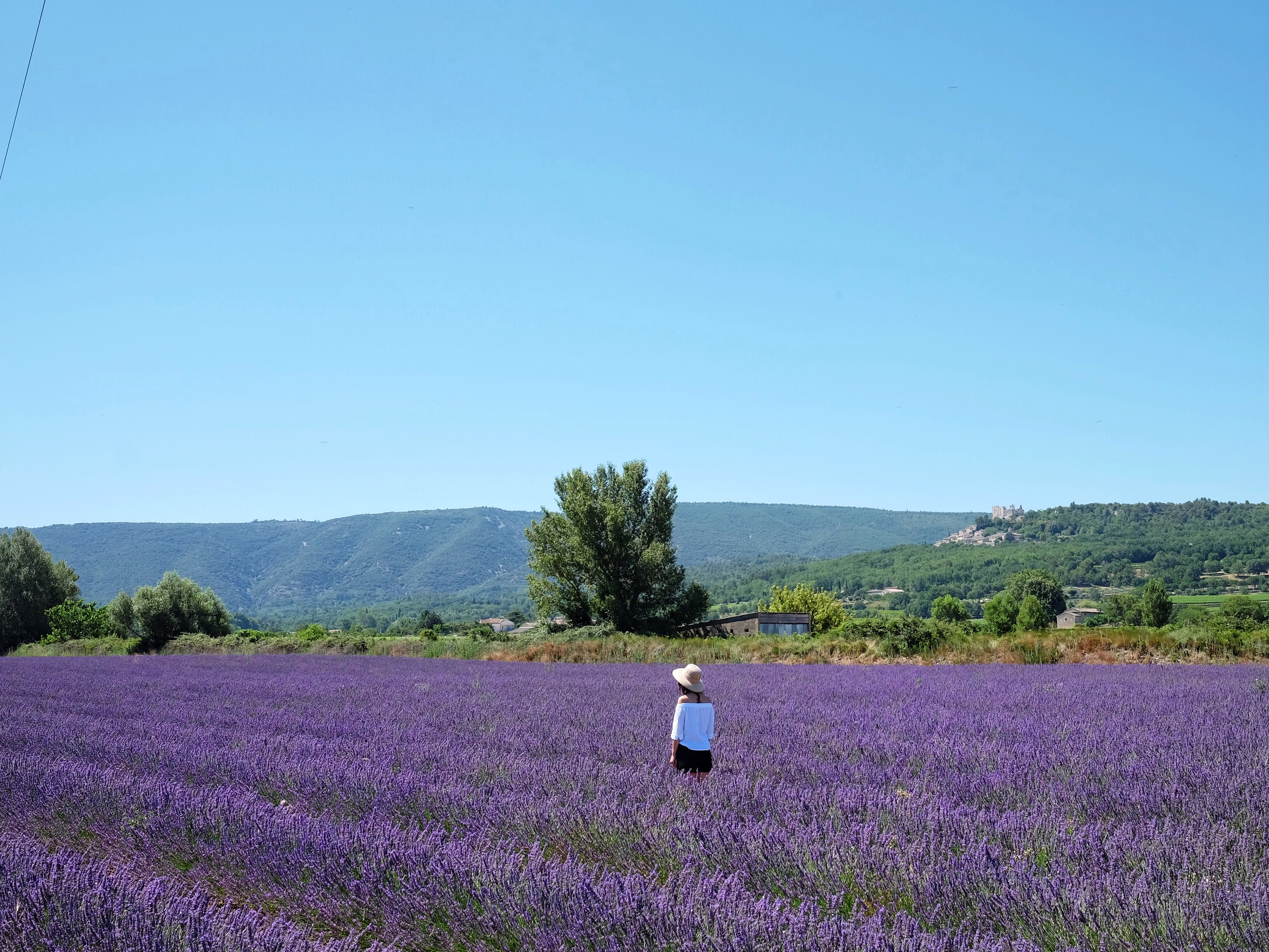 provence-france-lavender-field